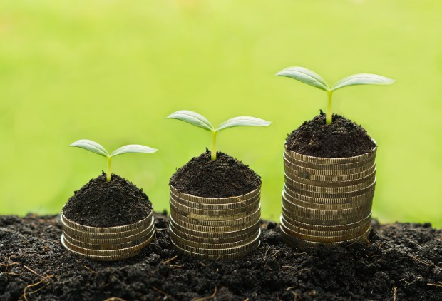 trees growing on coins / csr / sustainable development